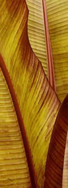 Repose - Leaf Poster