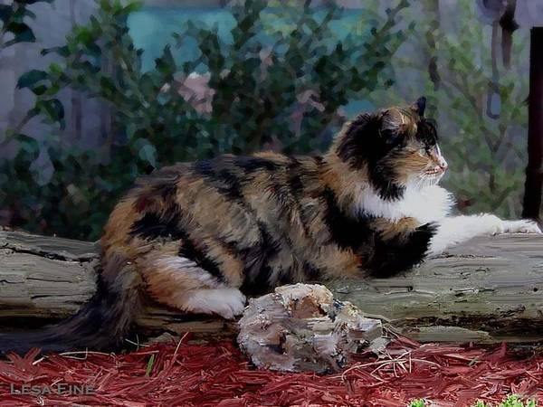 Resting Calico Cat Poster