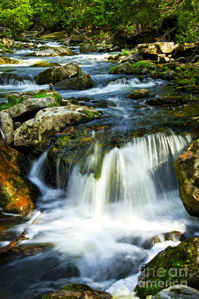 River Flowing Through Woods Poster