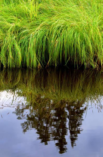 Riverbank Wild Grass Poster