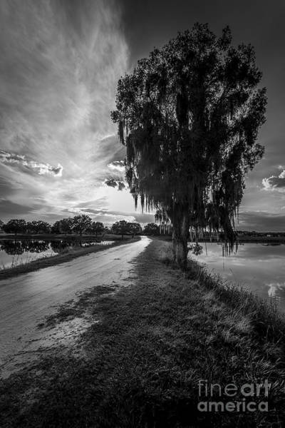 Road Into The Light-bw Poster