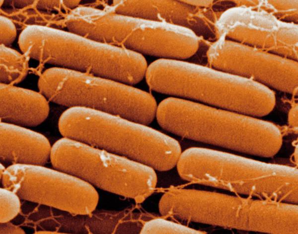 Rod-shaped E.coli Bacteria Poster