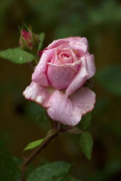Rose Art Poster