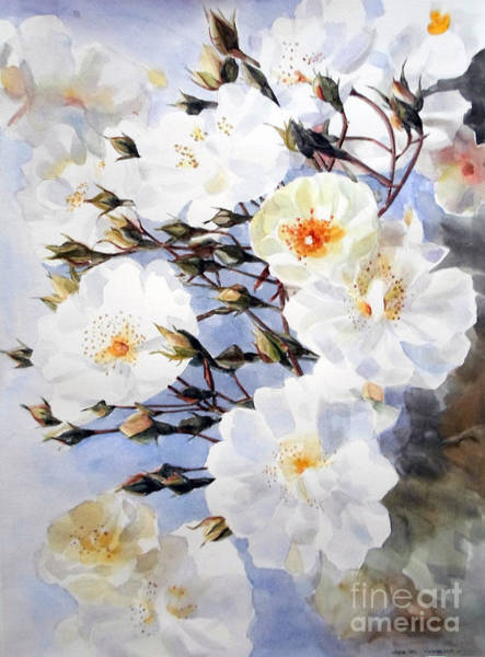 Wartercolor Of White Roses On A Branch I Call Rose Tchaikovsky Poster