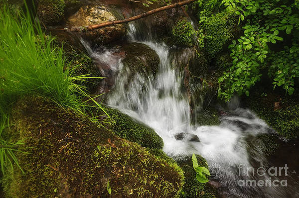 Rushing Mountain Stream And Moss Poster
