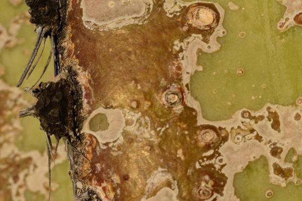 Saguaro Details I Poster