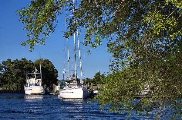 Sailboat Through Trees Poster