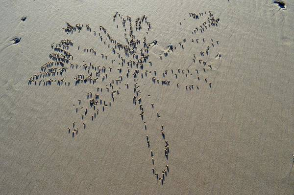 Natures Art - Dragonfly Sand Pattern Poster
