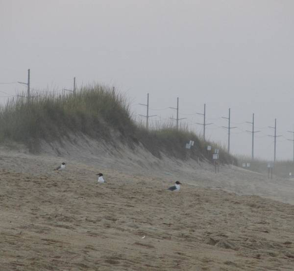 Sand Dunes And Seagulls Poster
