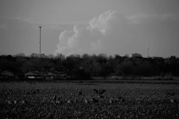 Sand Hill Cranes With Nebraska Thunderstorm Poster