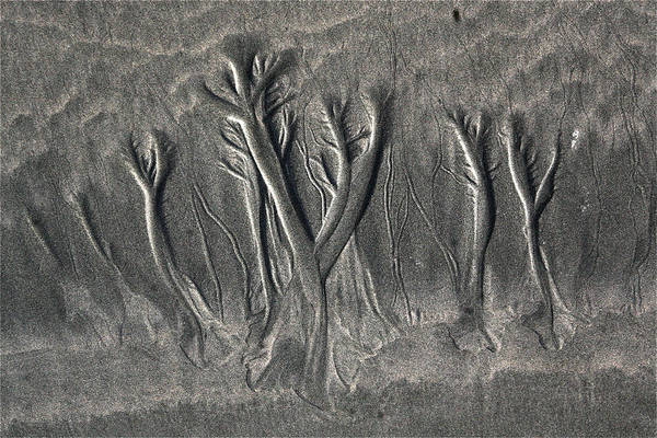 Sand Trees Poster
