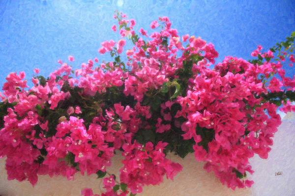 Santorini Flowers Grk1113 Poster