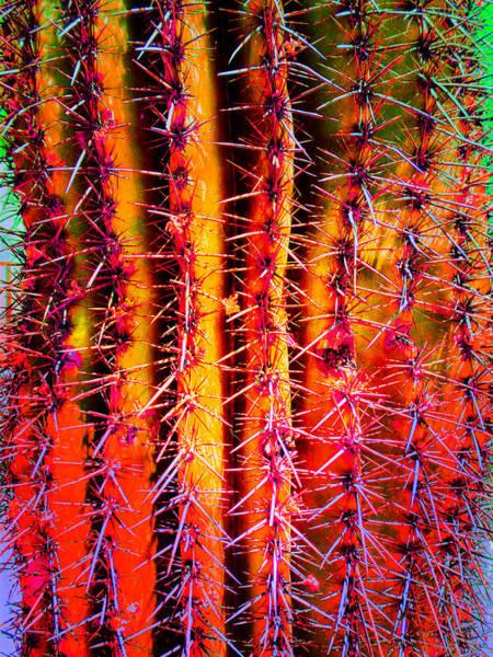 Scottsdale Saguaro Poster