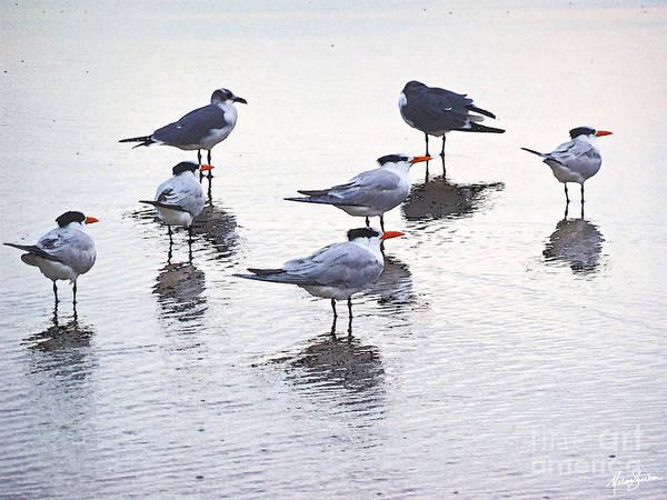 Sea Birds No.2 Poster