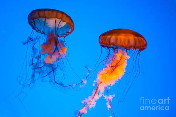 Sea Nettles Poster