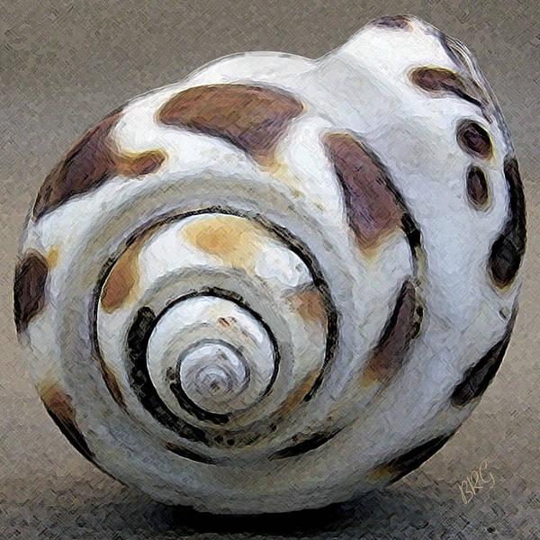 Seashells Spectacular No 2 Poster