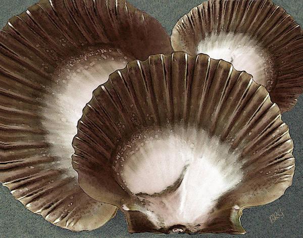 Seashells Spectacular No 22 Poster