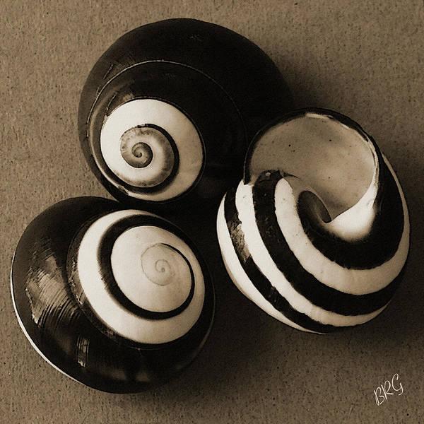 Seashells Spectacular No 27 Poster