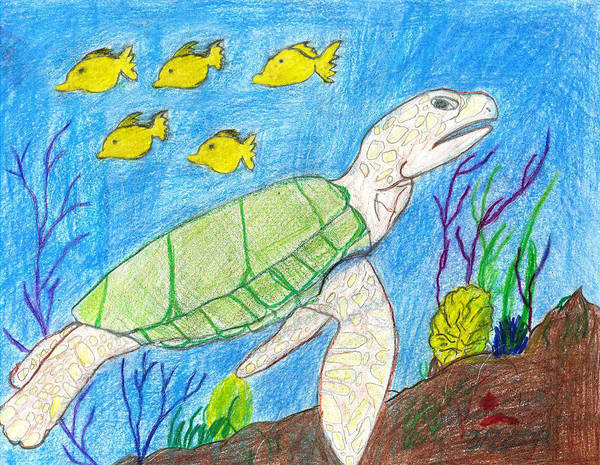 Poster featuring the drawing Seaturtle Swimming The Reef by Fred Hanna
