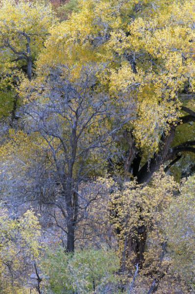 Sedona Fall Color Poster
