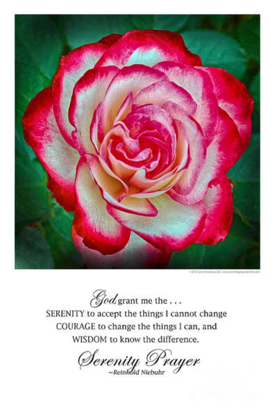 Serenity Prayer Print -- Rose At Brookside Gardens Poster