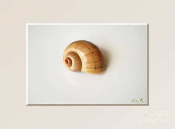 Shell. Delicate Colors Poster