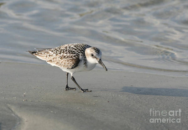 Shore Bird On Ocean Beach Poster