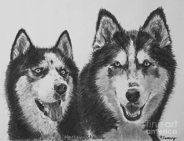 Siberian Husky Dogs Sketched In Charcoal Poster