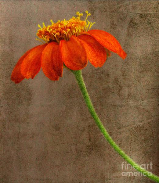 Simply Orange Poster