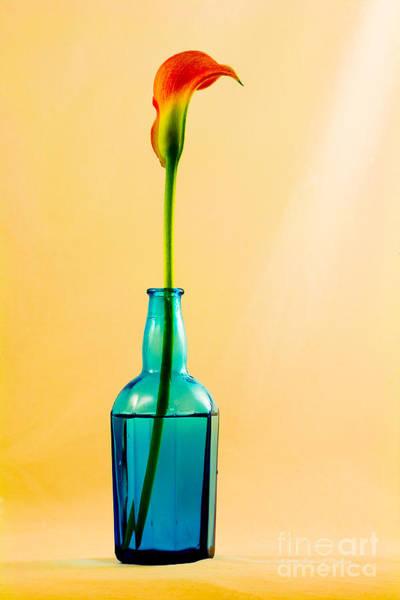 Single Calla In Blue Bottle Poster