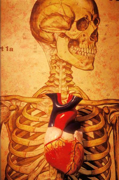 Skeleton And Heart Model Poster