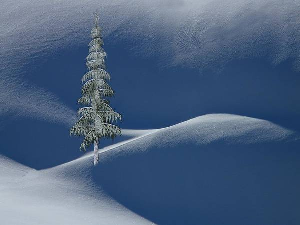 Snow Covered Tree And Mountains Color Poster