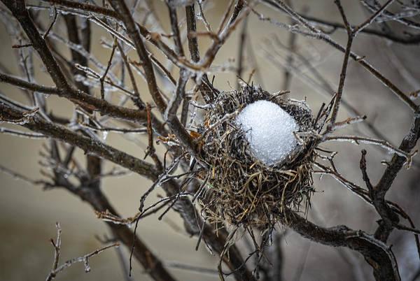 Snow Filled Nest Poster