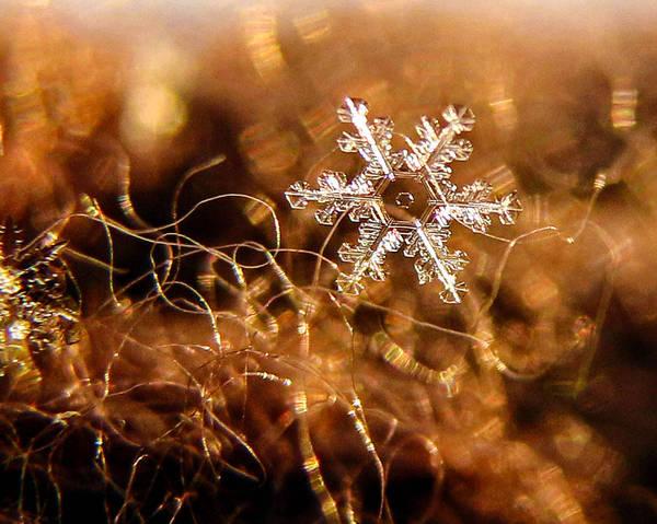 Snowflake On Brown Poster