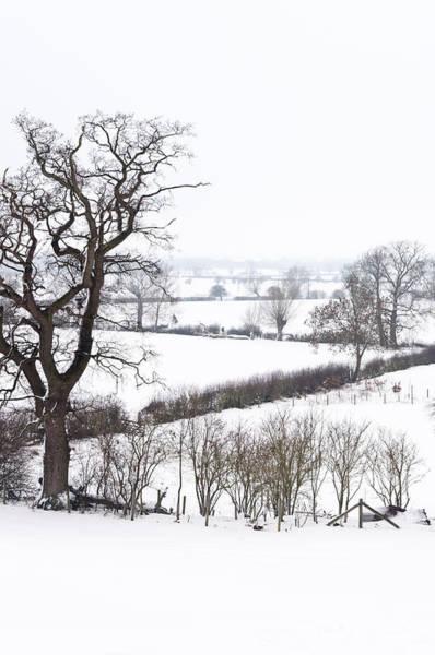 Snowy Fields Poster