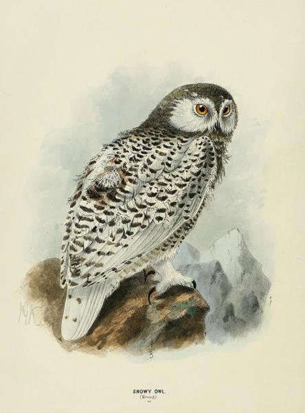 Snowy Owl 1 Poster