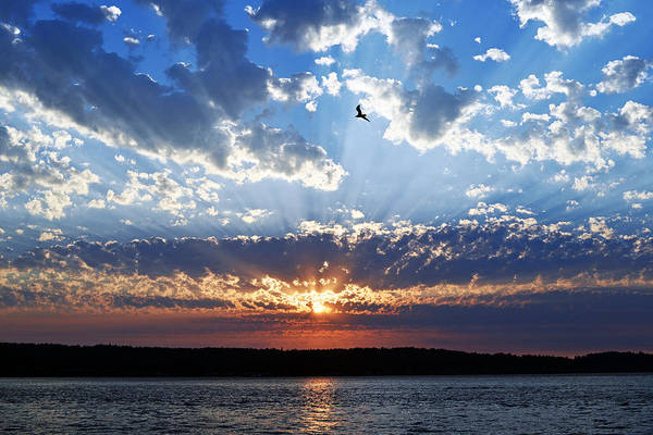 Soaring Sunset Poster