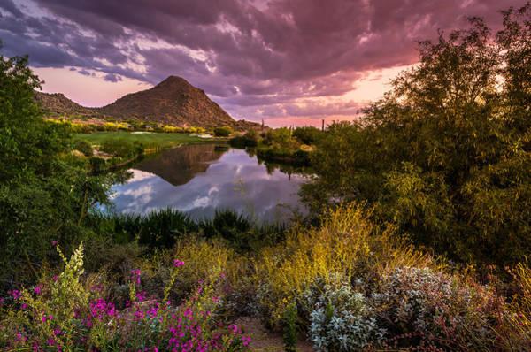 Sonoran Desert Spring Bloom Sunset  Poster