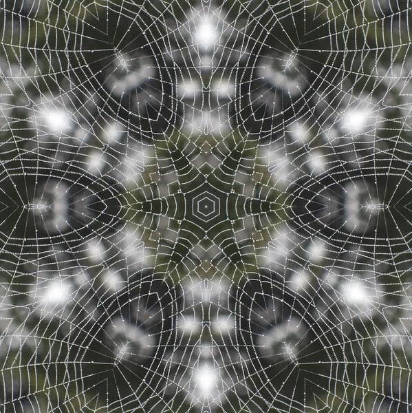 Spiderweb In Black Poster