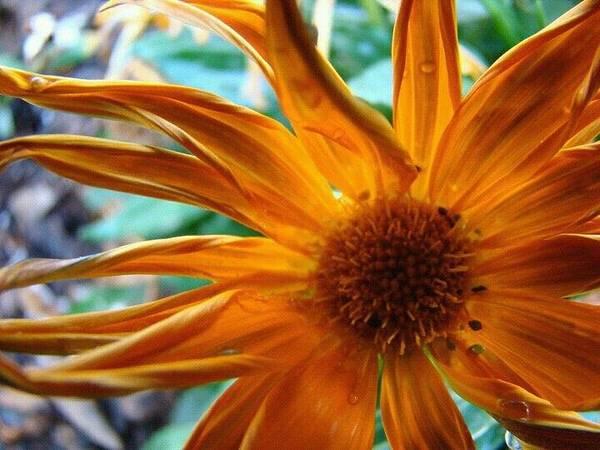 Spiked Orange Flower Poster