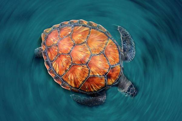 Spin Turtle Poster