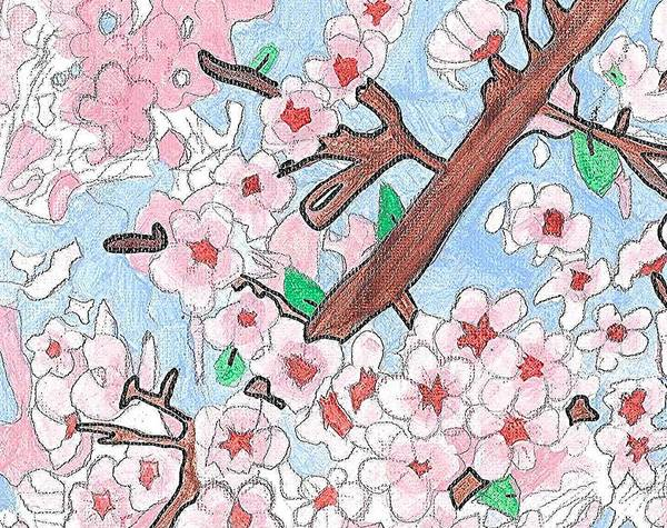 Poster featuring the painting Spring Cherry Blossoms  by Fred Hanna