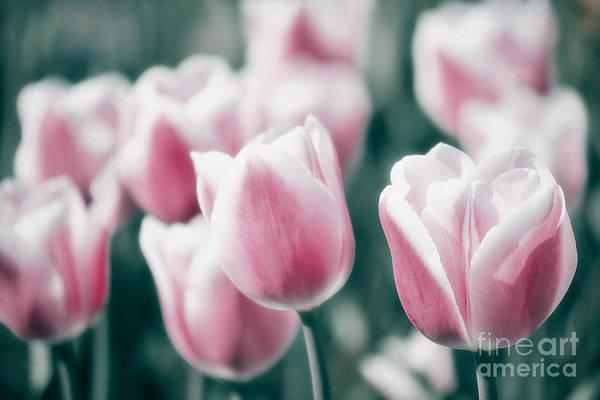 Spring In Love Poster