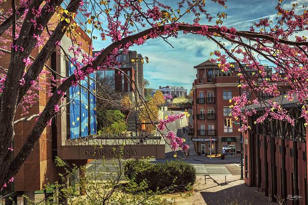 Spring In The Scenic City Poster