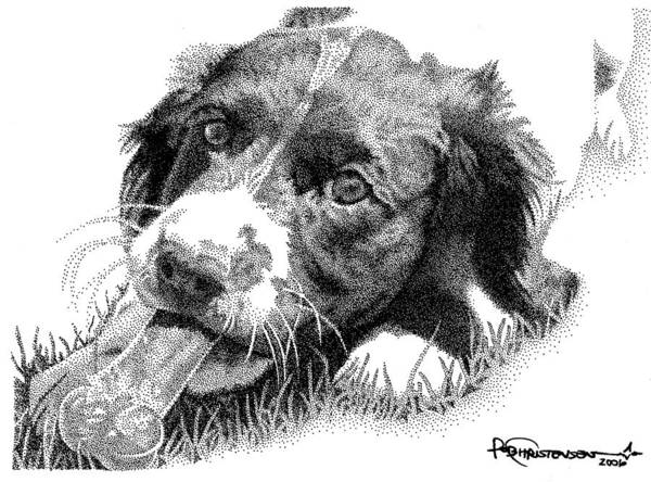 Poster featuring the drawing Springer Puppy by Rob Christensen
