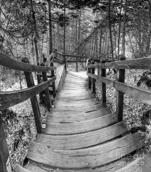 Stairs To Miner's Falls In Black And White Poster