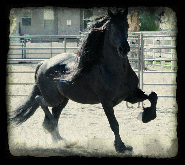 Stallion In Motion Poster