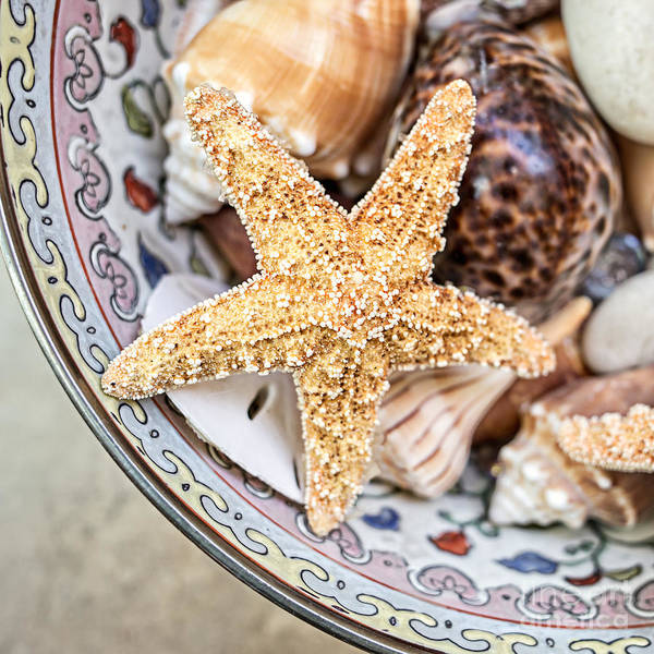 Starfish And Seashells Poster
