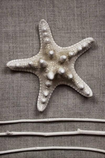 Starfish And Sticks Poster
