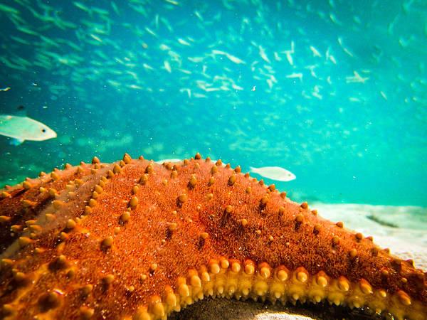 Stars And Fish And Starfish Poster
